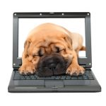 laptop with sleeping puppy dog